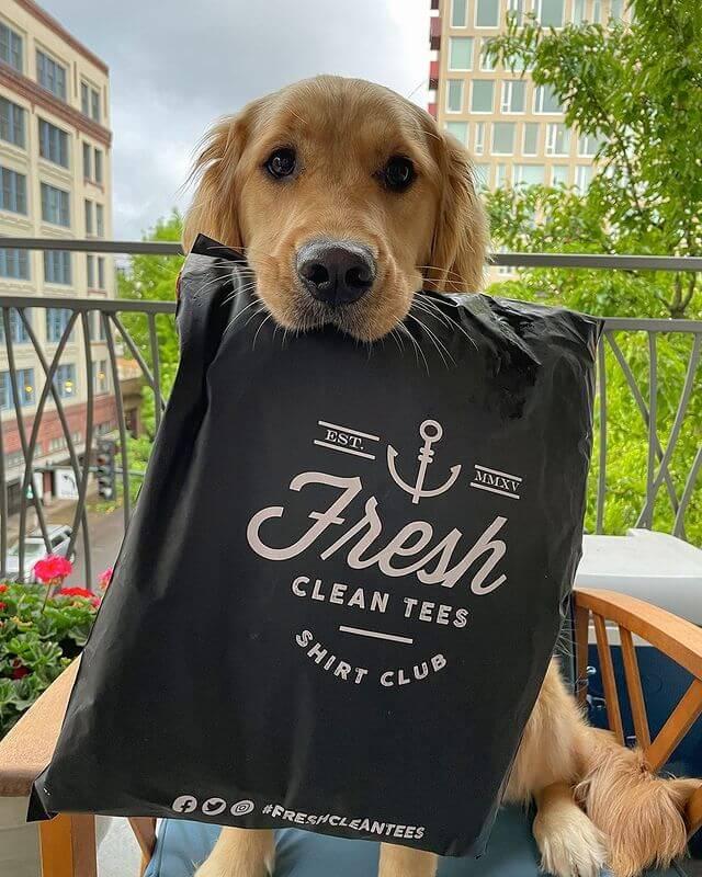 Fresh Clean Tees reviews